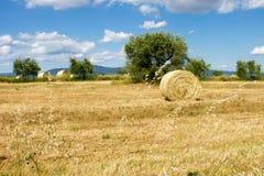 麦子土地 免版税库存照片