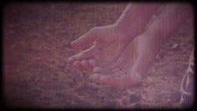 麦子在农夫的手上 人检查收获运转的手,粗砺的皮肤 影视素材