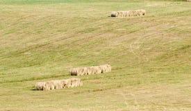 麦子在干草堆 免版税图库摄影