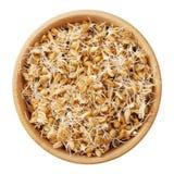 麦子在木碗发芽,隔绝在白色 免版税库存图片