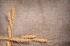 麦子在粗麻布背景的耳朵边界 免版税图库摄影