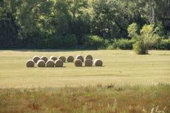 麦子在领域滚动 库存图片