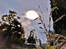 麦子太阳电灯泡 免版税库存图片
