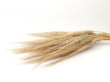 麦子小尖峰 库存照片