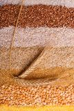 麦子小树枝在不同的谷物存放人说谎  免版税库存图片