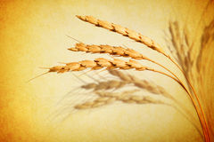 麦子抽象背景 免版税库存图片