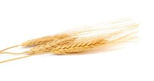 麦子捆绑 库存图片