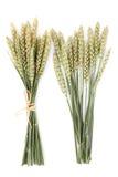 麦子捆绑 免版税库存图片