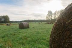 麦子收割期 库存图片