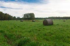 麦子收割期 库存照片