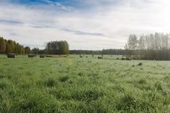 麦子收割期 免版税库存照片