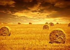 麦子收割期 免版税图库摄影