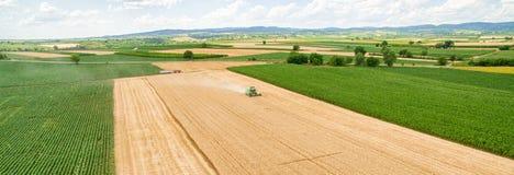 麦子收获全景 库存图片