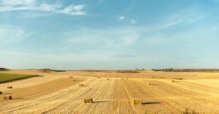 麦子收获在西班牙a 免版税库存图片