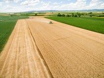 麦子收获,领域的鸟瞰图 图库摄影