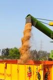 麦子收获 图库摄影