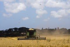 麦子收获 库存图片