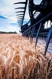 麦子收获 免版税库存照片