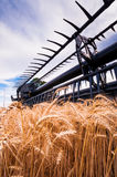 麦子收获IX 库存图片