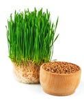 麦子新芽和麦子种子在木碗 库存图片
