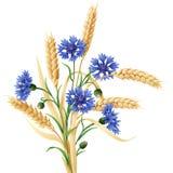 麦子束的矢车菊和耳朵 免版税库存照片