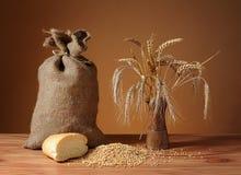 麦子玉米穗在花瓶的 免版税库存图片