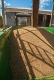麦子玉米装货  免版税图库摄影