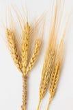 麦子的三个小尖峰栓与绳索和两粒大麦枝杈 库存图片