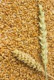 麦子的两个小尖峰 免版税库存照片