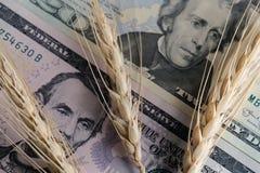 麦子的价格进口和出口的 在美国钞票背景的三个谷物小尖峰  特写镜头 画象主持 免版税库存照片