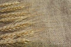麦子的小尖峰在亚麻制织品,背景的从,帆布 库存图片
