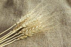 麦子的小尖峰在亚麻制织品,背景的从,帆布 库存照片