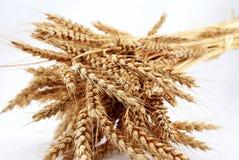 麦子的小尖峰 免版税库存图片