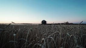 麦子的特写镜头耳朵,横跨领域的联合收割机乘驾和收获麦子在晚上 对场面的场面 股票视频