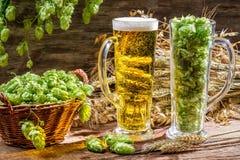 麦子的耳朵在新鲜的啤酒围拢的金子的跳跃 免版税库存图片