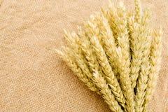 麦子的耳朵在花束 图库摄影