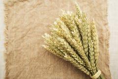 麦子的耳朵在花束 库存图片