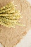 麦子的耳朵在花束 免版税库存照片