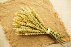 麦子的耳朵在花束 库存照片