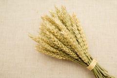 麦子的耳朵在花束 免版税库存图片