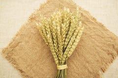 麦子的耳朵在花束 免版税图库摄影