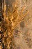 麦子的金黄耳朵在用于装饰的石背景的 库存图片