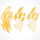 麦子的风格化耳朵 免版税图库摄影
