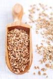 麦子种子充分的木瓢在白色木背景的 库存照片