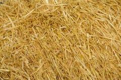 麦子秸杆背景 库存照片