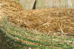 麦子秸杆 设计的织地不很细抽象背景 免版税库存图片