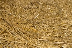 麦子秸杆 设计的织地不很细抽象背景 图库摄影