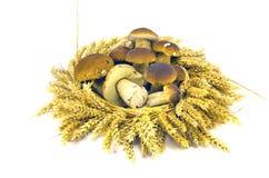 麦子耳朵加冠花圈和新鲜的mushroms等概率圆牛肝菌蕈类 库存照片