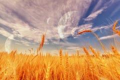 麦子耳朵和天空 库存照片