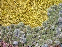 麦子耳朵和绿色植物样式 免版税图库摄影